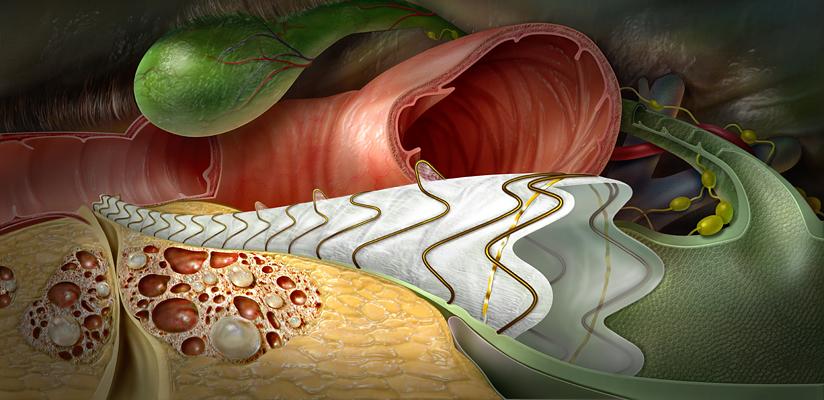 Gastroenterology & Hepatobiliary Systems